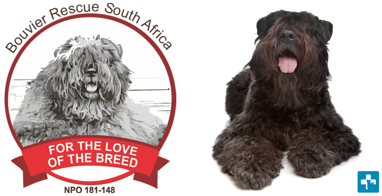 Bouvier Rescue SA | pethealthcare co zaBouvier Rescue South