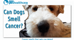 Dogs can smell cancer on humans