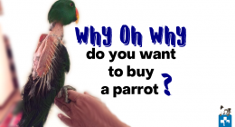 How to buy a parrot, Say no to caged birds, feather plucking, self mutilation, Brainy Bird Rescue and Sanctuary, Why do Birds Talk, Pet Healthcare, Pet Advice