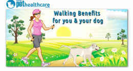 Walking benefits for you and your dog, dieregesondheid, animal health, pet insurance, diere versekering, troeteldierversekering suid afrika, south Africa, Pet Health Care, pet care health, petcarehealth, pethealthcare, ask the vet, dieremaniere, animal behaviour, sick animals, siek diere, honde, katte, cats, dogs, veterinary advice, dog walks, dog events, pet wellness, kitten care health, pet care health insurance, pet insurance health, pet care news, pet health care questions, pet care health claim form, p