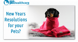 New Years Resolutions for your pets, dieregesondheid, animal health, pet insurance, diere versekering, troeteldierversekering suid afrika, south Africa, Pet Health Care, pet care health, petcarehealth, pethealthcare, ask the vet, dieremaniere, animal behaviour, sick animals, siek diere, honde, katte, cats, dogs, veterinary advice, dog walks, dog events, pet wellness, kitten care health, pet care health insurance, pet insurance health, pet care news, pet health care questions, pet care health claim form, pet
