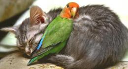 South Africa Parrot Care Pet Tips