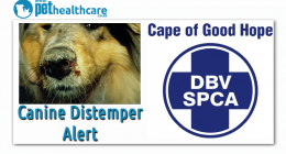 Canine Distemper Alers Cape of Good Hope SPCA, dieregesondheid, animal health, pet insurance, diere versekering, troeteldierversekering suid afrika, south Africa, Pet Health Care, pet care health, petcarehealth, pethealthcare, ask the vet, dieremaniere, animal behaviour, sick animals, siek diere, honde, katte, cats, dogs, veterinary advice, dog walks, dog events, pet wellness, kitten care health, pet care health insurance, pet insurance health, pet care news, pet health care questions, pet care health claim