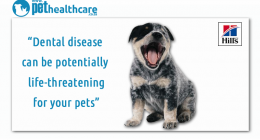 Pet Dental Health, Hill's, South Africa, Bad Breath, Dog Breath, Prescription Diet, Oral Care , Science Plan,dieregesondheid, animal health, pet insurance, diere versekering, troeteldierversekering suid afrika,   south Africa, Pet Health Care, pet care health, petcarehealth, pethealthcare, ask the vet, dieremaniere,   animal behaviour, sick animals, siek diere, honde, katte, cats, dogs, veterinary advice, pet wellness, kitten care health, pet care health insurance, pet insurance health, pet care news,   pet