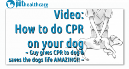 CPR for dogs and cats. dieregesondheid, animal health, pet insurance, diere versekering, troeteldierversekering suid afrika, south Africa, Pet Health Care, pet care health, petcarehealth, pethealthcare, ask the vet, dieremaniere, animal behaviour, sick animals, siek diere, honde, katte, cats, dogs, veterinary advice, dog walks, dog events, pet wellness, kitten care health, pet care health insurance, pet insurance health, pet care news, pet health care questions, pet care health claim form, pet care health a