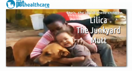 Lilica The Junkyard Mutt, dieregesondheid, animal health, pet insurance, diere versekering, troeteldierversekering suid afrika, south Africa, Pet Health Care, pet care health, petcarehealth, pethealthcare, ask the vet, dieremaniere, animal behaviour, sick animals, siek diere, honde, katte, cats, dogs, veterinary advice, dog walks, dog events, pet wellness, kitten care health, pet care health insurance, pet insurance health, pet care news, pet health care questions, pet care health claim form, pet care healt