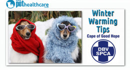 SPCA CAPE OF GOOD HOPE, dieregesondheid, animal health, pet insurance, diere versekering, troeteldierversekering suid afrika, south Africa, Pet Health Care, pet care health, petcarehealth, pethealthcare, ask the vet, dieremaniere, animal behaviour, sick animals, siek diere, honde, katte, cats, dogs, veterinary advice, dog walks, dog events, pet wellness, kitten care health, pet care health insurance, pet insurance health, pet care news, pet health care questions, pet care health claim form, pet care health