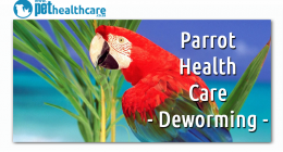 Deworming your pet parrot, dieregesondheid, animal health, pet insurance, diere versekering, troeteldierversekering suid afrika, south Africa, Pet Health Care, pet care health, petcarehealth, pethealthcare, ask the vet, dieremaniere, animal behaviour, sick animals, siek diere, honde, katte, cats, dogs, veterinary advice, dog walks, dog events, pet wellness, kitten care health, pet care health insurance, pet insurance health, pet care news, pet health care questions, pet care health claim form, pet care heal
