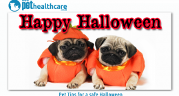 Pet tips for a safe halloween