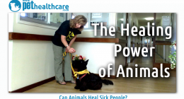 the healing power of animals