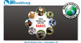 World Rabies Day September 28 Pet health care, dieregesondheid, animal health, pet insurance, diere versekering, troeteldierversekering suid afrika, south Africa, Pet Health Care, pet care health, petcarehealth, pethealthcare, ask the vet, dieremaniere, animal behaviour, sick animals, siek diere, honde, katte, cats, dogs, veterinary advice, dog walks, dog events, pet wellness, kitten care health, pet care health insurance, pet insurance health, pet care news, pet health care questions, pet care health claim