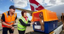 Pet Travel Agency South Africa, Moving Pets, Relocating Pets, Overseas Animal Relocation, Travel Advice, Pet Healthcare